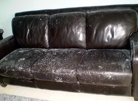 Leather sofa mildew