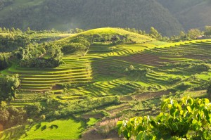 Terraced_fields_Sa_Pa_Vietnam