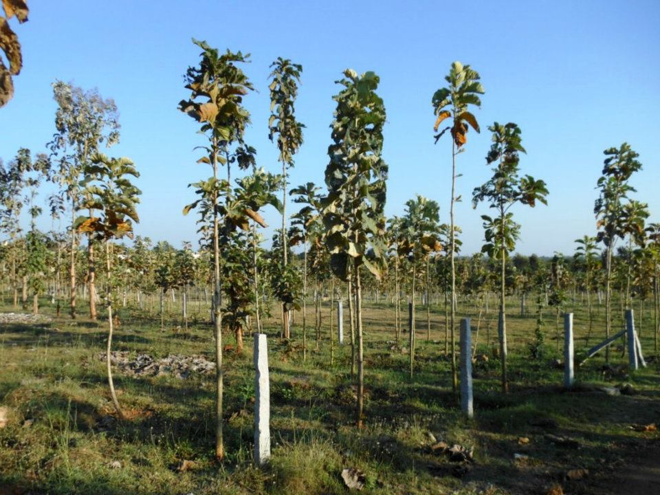 Antillia Teak Garden Mysore 2