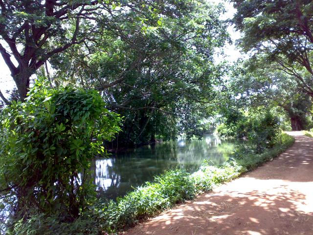 BirdSong Mysore