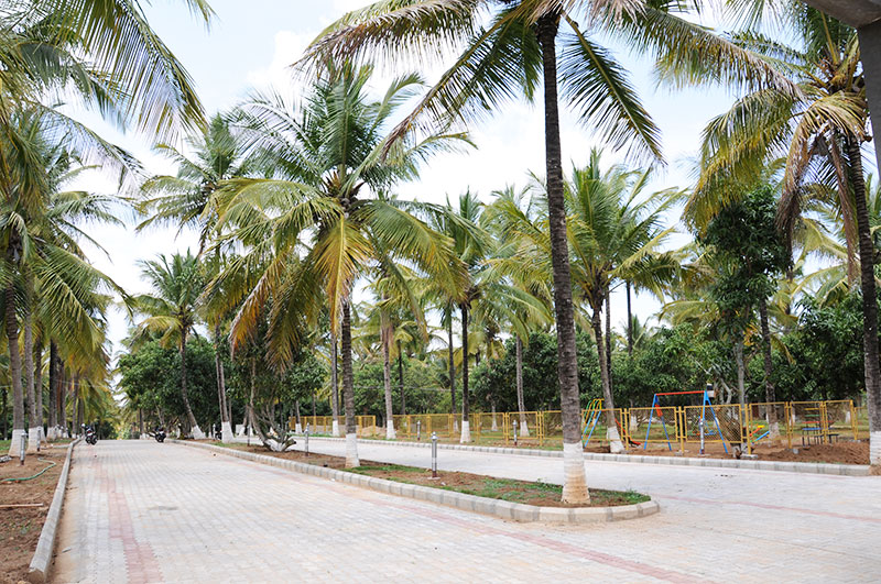 Foundations Green Grass Mysore 2