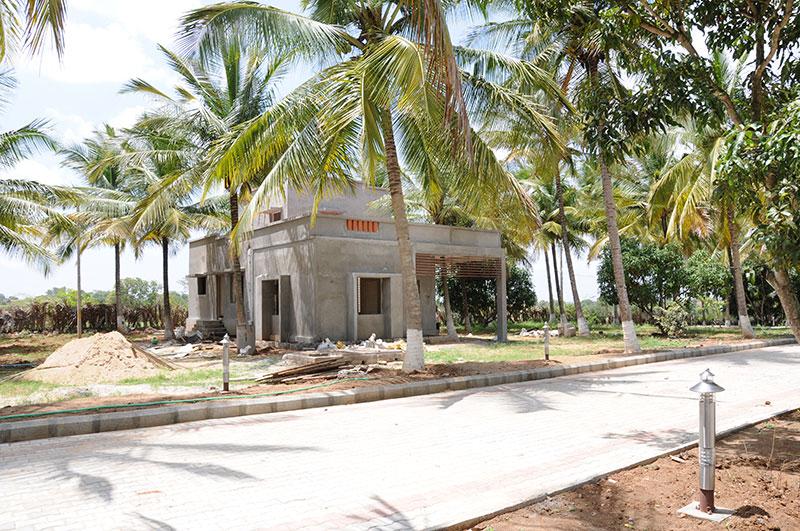 Foundations Green Grass Mysore 3
